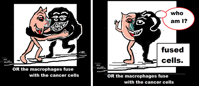 macrophages fuse with cancer cells