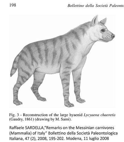 Italian Messinian Hyena Lycyaena Chaeretis