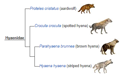 hyenidae